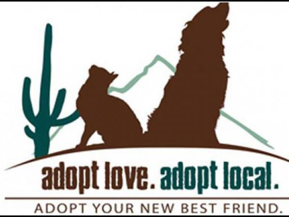 Eller College Student Project Helps Local Animal Welfare Groups Garner $2M in Grants