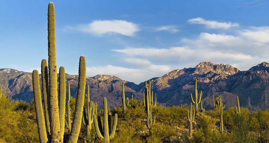 tucson, Arizona - desert saguaros and catalina mountain range